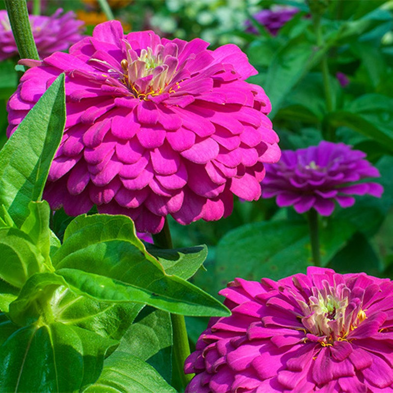 семена цветов на заказ
